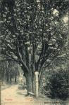 A Hétbükkfa egykor