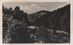 Erdőrészlet a Tacsi-árokkal