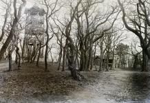 Erdőrészlet a régi Károly-kilátóval