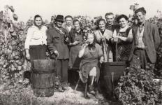 Soproni szüretelők