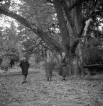 Bátyámmal és nagymamámmal a platánfa alatt. Akkor azt mondták, hogy 250 éves.