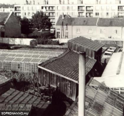 A Raffensperger kertészet a Vitnyédi utcában