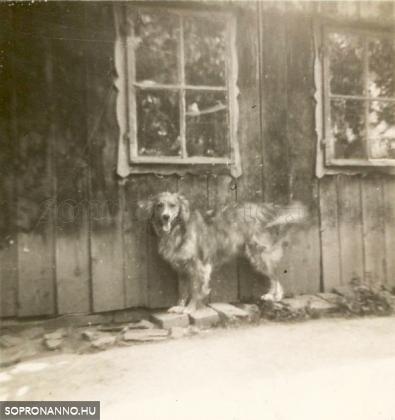 A vendéglő kutyusa