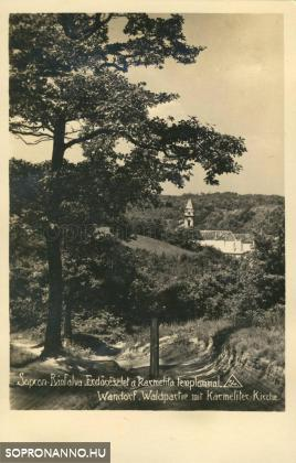 Erdőrészlet a Karmelita templommal