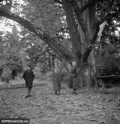 Bátyámmal és nagymamámmal a platánfa alatt